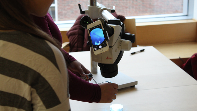 A demonstration of optogenetic techniques in the classroom