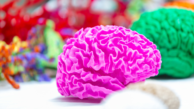 Brain art made up of paper and pipe cleaners