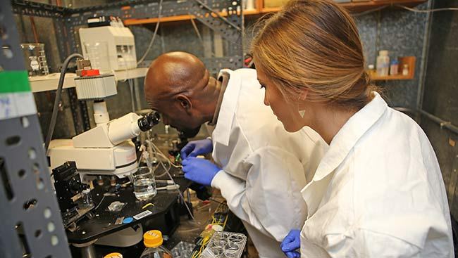 A female and male neuroscientist conduct an experiment in the lab.