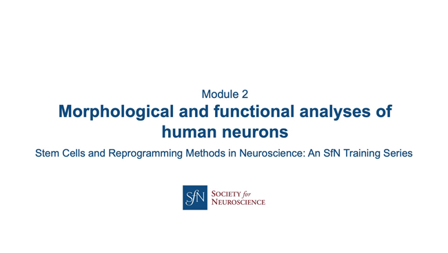 Title card for presentation, Morphological and Functional Analysis of Human Neurons