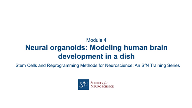 Title card for presentation, Neural Organoids: Modeling Human Brain Development in a Dish