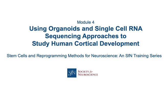 Title card for presentation, Using Organoids and Single Cell RNA Sequencing Approaches to Study Human Brain Development