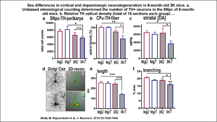 Images of graphs showing sex differences in cortical and dopaminergic neurodegeneration in 6-month-old 3K mice.