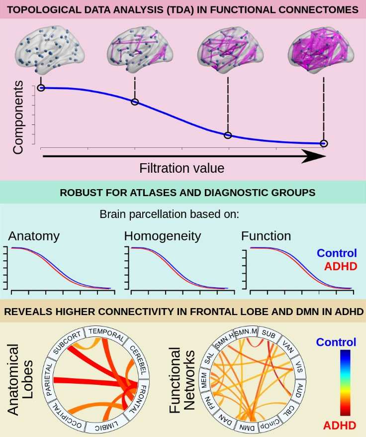 Figure from Exploring Individual Brain Connectomes With Topological Data Analysis in ADHD, published on published on April 21, 2020, in eNeuro and authored by Zeus Gracia-Tabuenca, Juan Carlos Díaz-Patiño, Isaac Arelio, and Sarael Alcauter