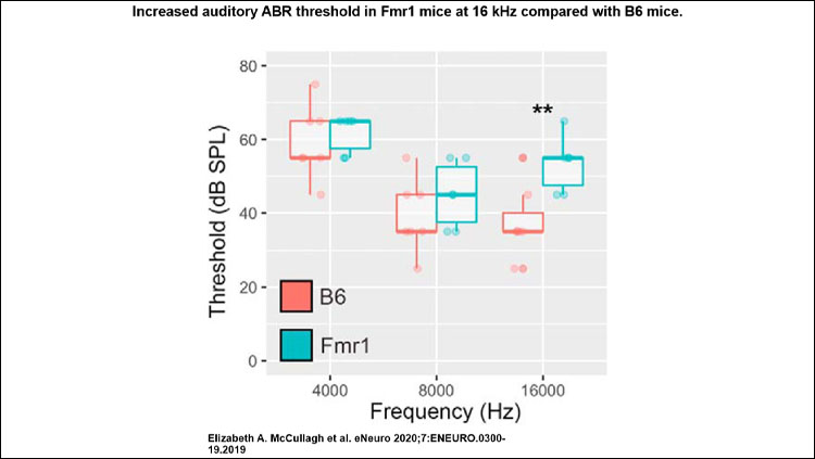 Increased auditory ABR threshold in Fmr1 mice at 16 kHz compared with B6 mice. Tonal ABR measurements were made on mice at the following three frequencies: 4000, 8000, and 16,000 Hz.