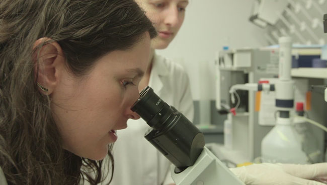 Neuroscientist looks into microscope