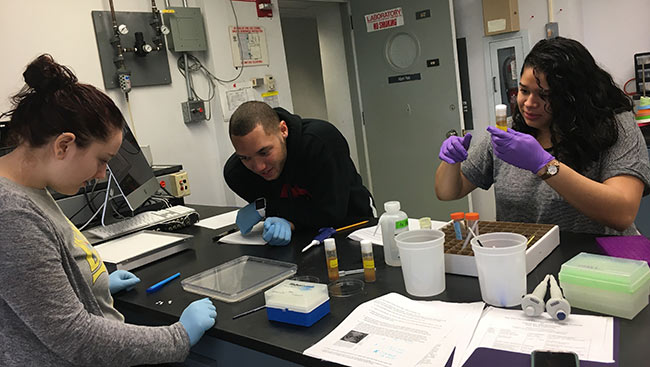 A group of undergraduate students studying neuroscience conduct research over the summer.