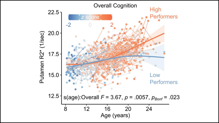 A graph showing that an increase in iron in the putamen (y axis) as age increase (x axis) is correlated with higher cognitive performance.